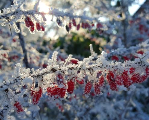 Gartenarbeit im Winter Landschaftsbau Bocholt Gartenpflege Rhede Innovatio
