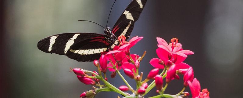 Nützlinge im Garten Gartenpflege Innovatio Bocholt rhede