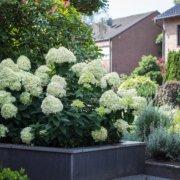 Innovatio GmbH Landschaftsbau Gartenbau Beispiele Bocholt Rhede Gartenplanung Gestaltung
