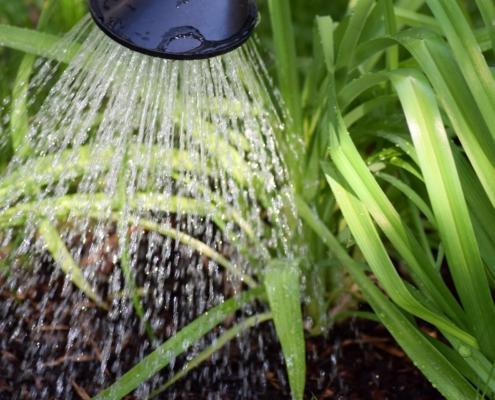 Pflanzen im Garten bei starker Hitze richtig gießen Gartenbau Pflege Innovatio Bocholt rhede