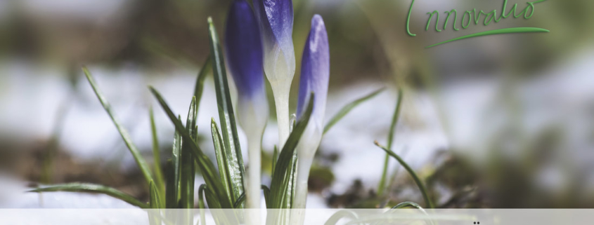 Innovatio GmbH Landschaftsbau und Gartenanlagen Düngen im Frühling im Garten