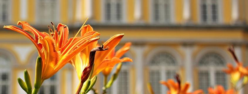 Innovatio Landschaftsbau und gartengestaltung Bocholt Rhede Tipps für die Gartenarbeit