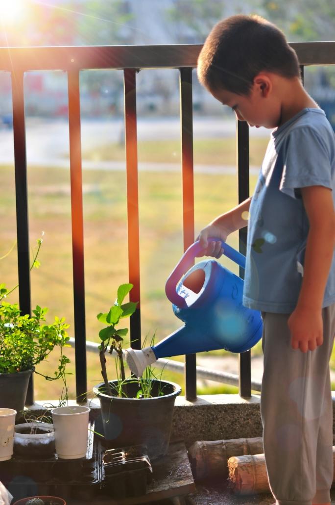 Ausbildung zum Garten- und Landschaftsbauer in Bocholt Pflanzen im Garten bei starker Hitze richtig gießen Gartenbau Pflege Innovatio Bocholt rhede